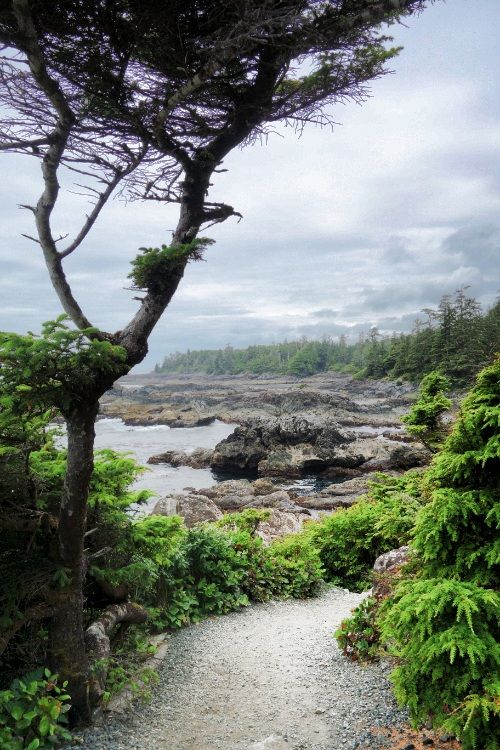 Wild pacific trail. Ucluelet. Vancouver Island. British Columbia. Canada. Dndgo.com