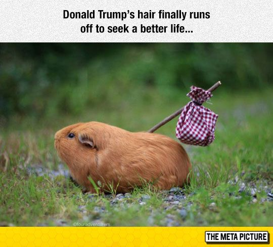 Donald Trump's Hair Is Free