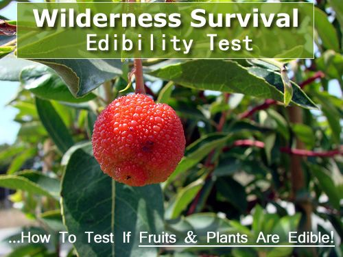 Wilderness Survival Edibility Test - a simple way to tell if wild plants or fruits are edible... #survival #shft #camping #hiking
