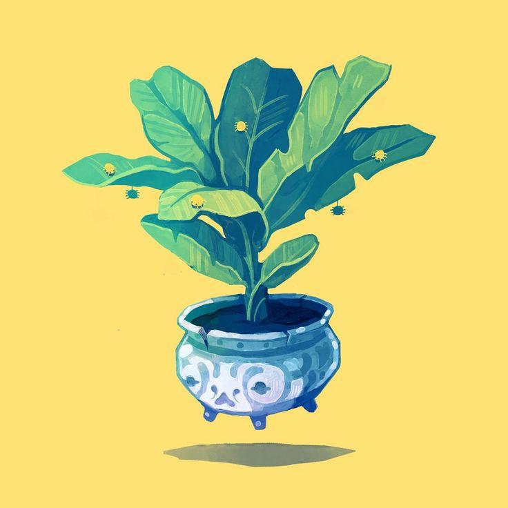 Catherine Unger   ✨New Plant Friend✨ - Dwarf Cavendish Banana Plant.   Twitter
