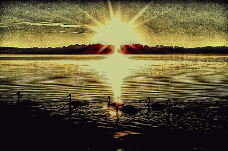 Swans at Sunrise by AngelEowyn