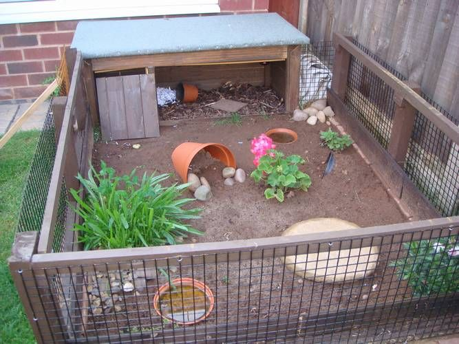 Tortoise Protection Group Members Forum - Tortoise Protection Group