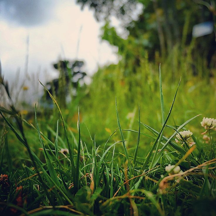 Grass in focus
