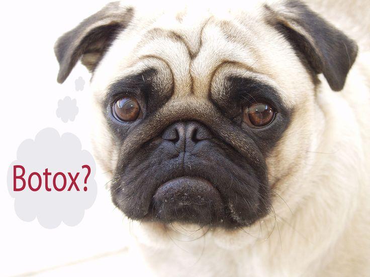 Therapeutischer und kosmetischer Einsatz von Botox -Alternativen zu Botox | Biokosmetik & Gesundheit - Rezepte, Anleitungen, Tipps & News