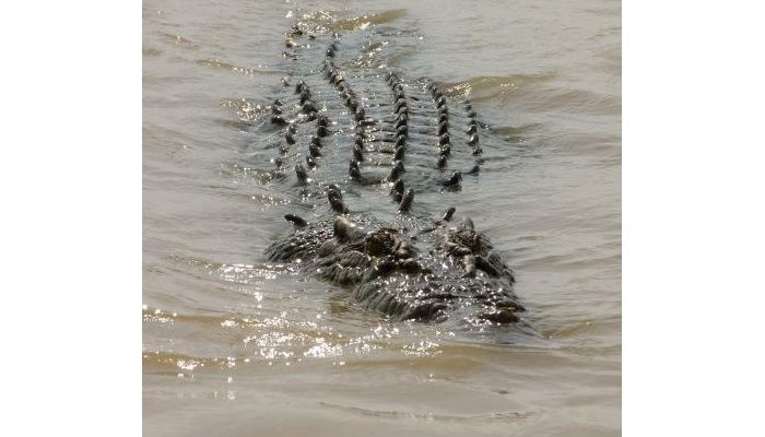 Jumping on Croc Cruise!