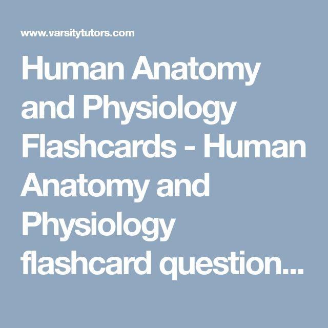 Human Anatomy And Physiology Flashcards Human Anatomy And