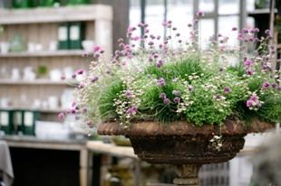 To-die-for urn in the Shop this summer. Love the poofy, pretty planting.
