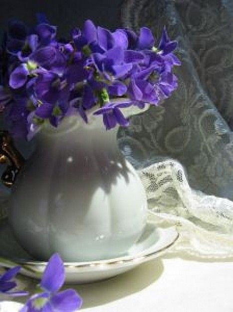 Violets and Lace