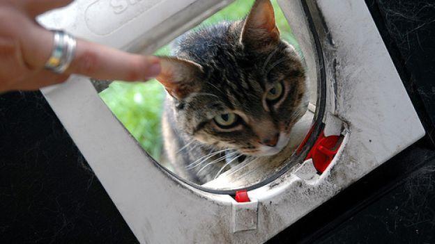Come insegnare al gattino a usare la gattaiola