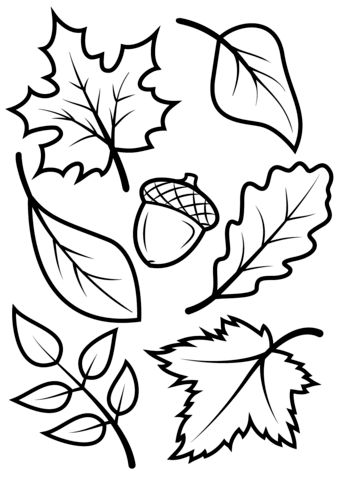 Fall Leaves and Acorn coloring page from Fall category. Select from 23670…