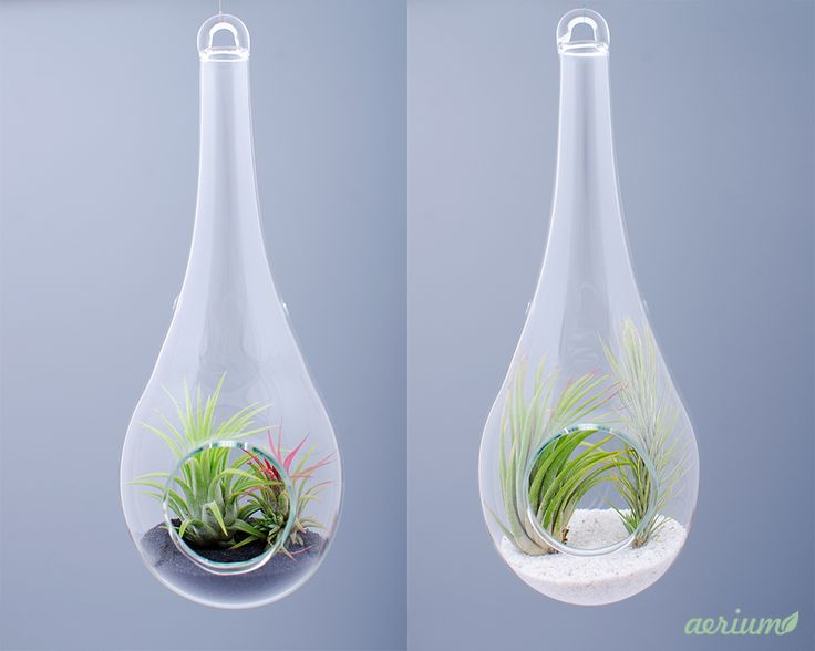 Black & White airplant terrariums. Beautifully handmade terrarium by romanian glass artisans. Dimensions are about 22 cm height and about 8 cm diameter. Airplants are included. https://www.etsy.com/shop/Aerium