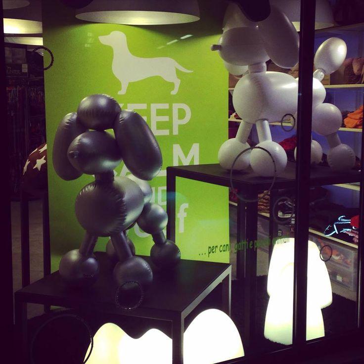 Le vetrine Minù Pet Shop e i prodotti direttamente dall'America Fatboy.