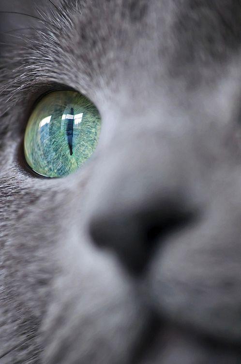 Beautiful close-up cute cat