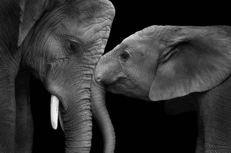 «The Majestic» è la mostra - aperta al pubblico dal 22 giugno al 10 luglio dalle 11 alle 18 alla Galleria Stanza 08 di via Gorani, a Milano - degli scatti di Wolf Ademeit, noto per le sue fotografie in bianco e nero e per i suoi «Ritratti Animali» (Foto True Love)