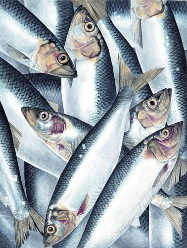 Seafood: A portfolio of illustrations created by Charlotte Knox