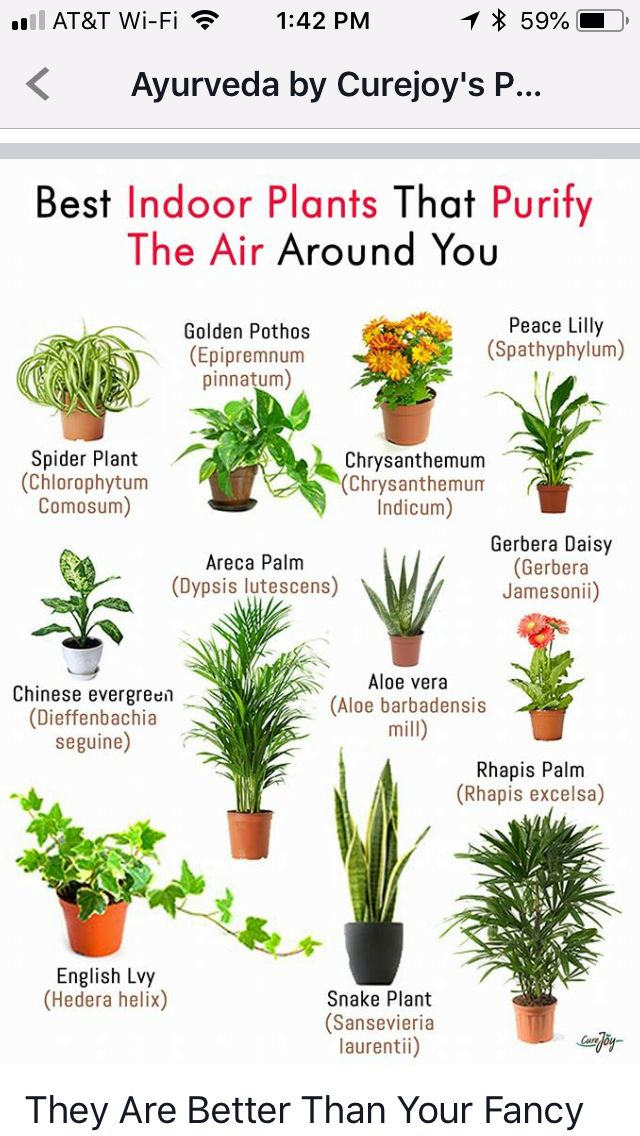 Plants For Home And Health
