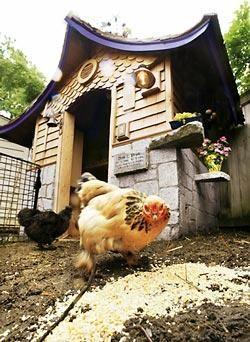 Congratulate, asian style chicken house