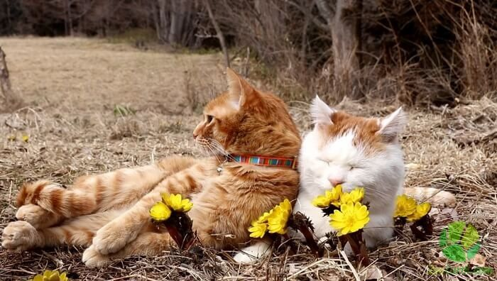 Pet Medications Creams For Cats