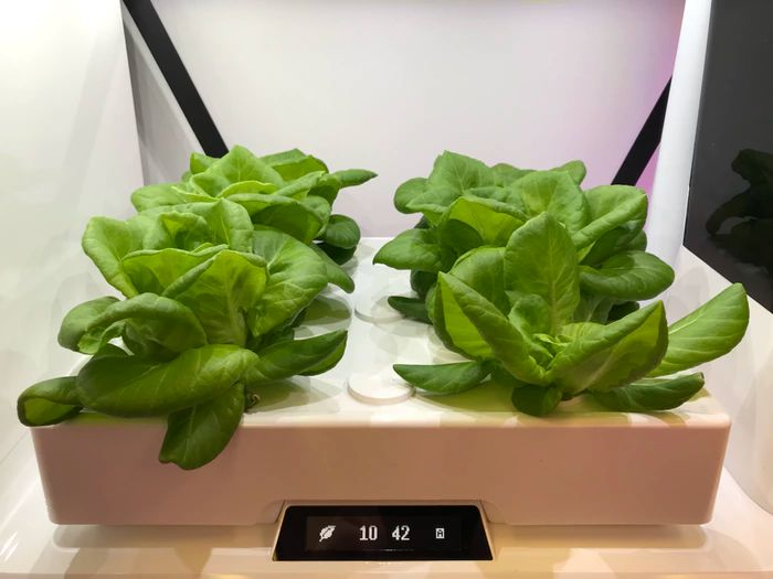 Aspara™ The Smart Indoor Garden By Aspara™ » It S Been 400 x 300