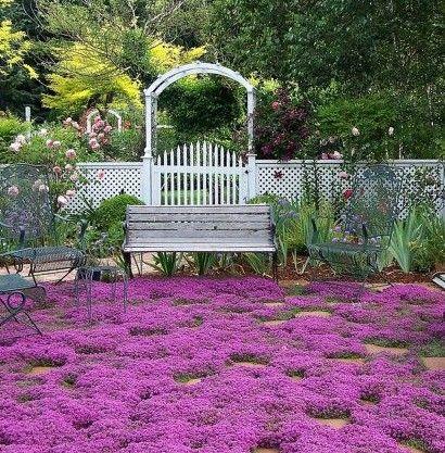 400 sementes de erva Tomilho Rastejante, cobertura Do Solo do jardim decoração com flores