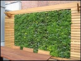 vertical garden outdoors feature wall