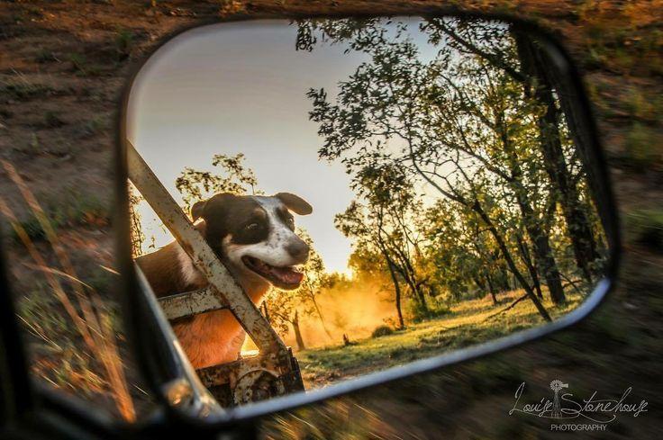 Bullocks and Bulldust Photography