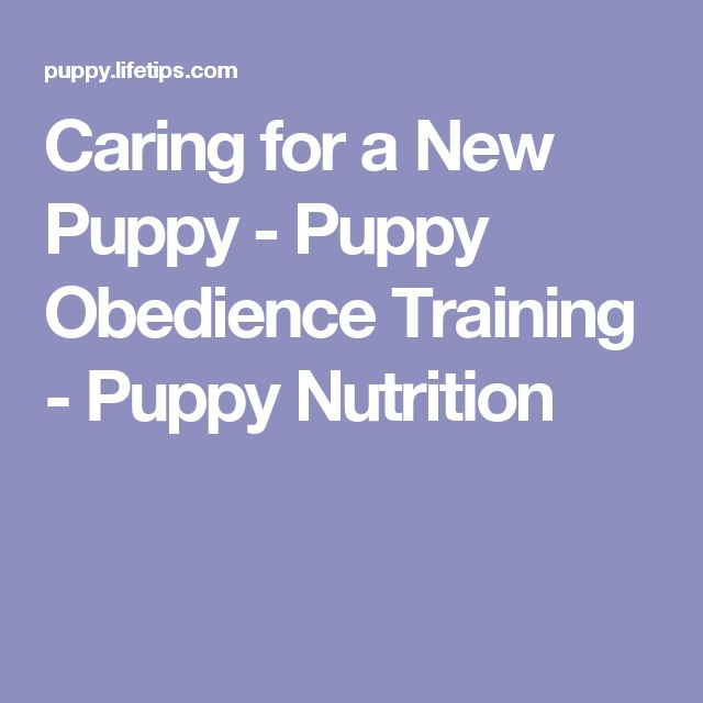 Caring for a New Puppy - Puppy Obedience Training - Puppy Nutrition