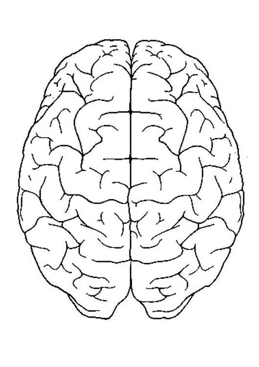 Coloring Page Brain Top View Brain Drawing Anatomy Coloring Book Human Brain