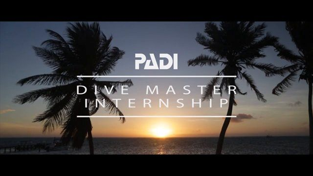 A look into what you can expect from joining GVI in the beautiful Yucatan Peninsula to do your PADI Divemaster and get work experience on critical marine conservation initiatives.