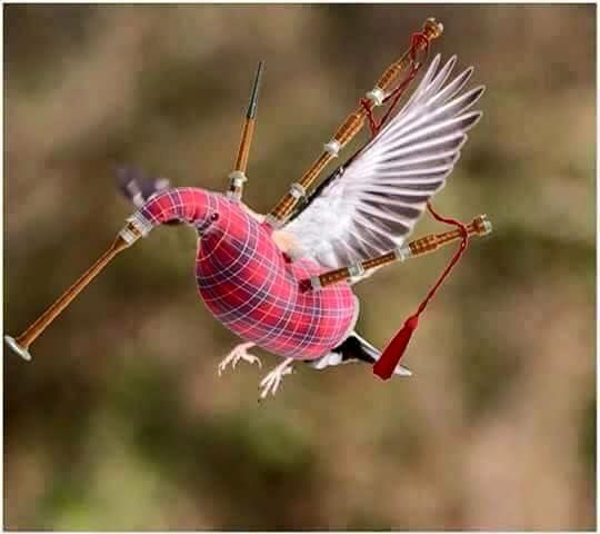 BREAKING NEWS!  A rare sighting of the endangered Scottish hummingbird. Known for its distinctive droning call, the Scottish hummer is highly attracted to whisky liqueur. Spotters have reported that the tiny, tartan colored bird can be lured to your deck or outdoor area with a glass of Drambuie.  I'd love to see one, but I hate sharing my Drambuie. Image via KristaBella-thanks!