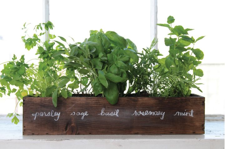 How To Grow a Windowsill Herb Garden