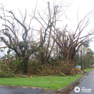 Trees down in Innisfail after Cyclone Larry.  Photo sent by Michael Wright to The Weather Channel feedback. #severe weather #weather #cyclone #hurricane