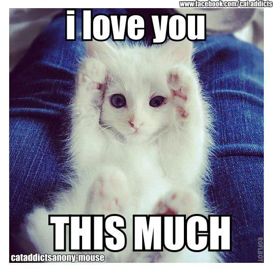 Cute kitten loves you this much. Happy Valentine's day!