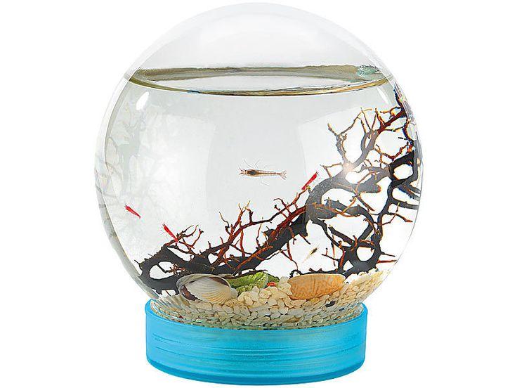 Versorgt sich 5 Jahre alleine,ohne Füttern oder Pumpe! Garnelen schwimmen um eine Koralle, der Boden ist mit Kies und kleinen Muscheln bedeckt. Das kleine Unterwasser-Paradies kann sich fast selbst versorgen,es braucht nur Sonnenlicht und ab und zu etwas Luft.Algen erzeugen Sauerstoff für die Bewohner.Krebse reinigen den Lebensraum und achten darauf, dass die Algen nicht Überhand nehmen. Durchmesser der Kugel 11 cm. Garnelen werden separat geliefert