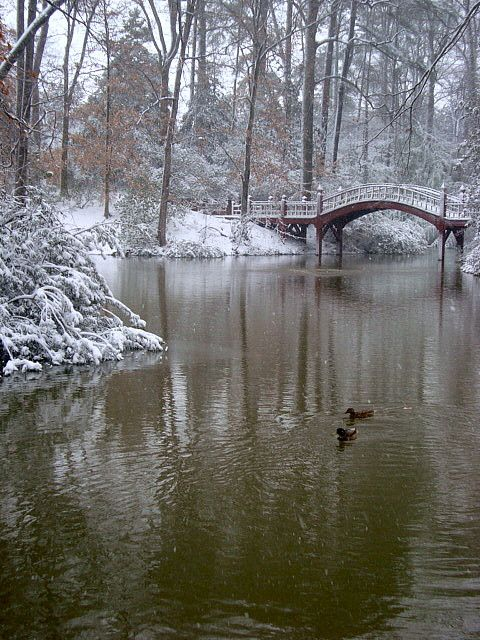 winter, Crim Dell, College of William and Mary, Williamsburg, VA.  Photo: orangemelody, via Flickr