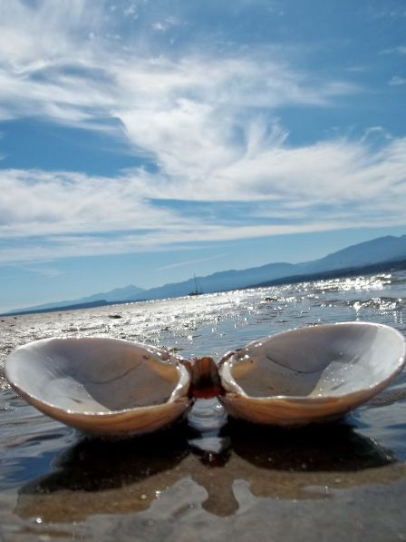 Comox beach * * on Vancouver Island in British Columbia.