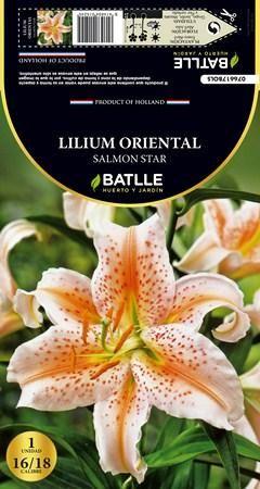 Bulbo Lilium Oriental Salmón Star