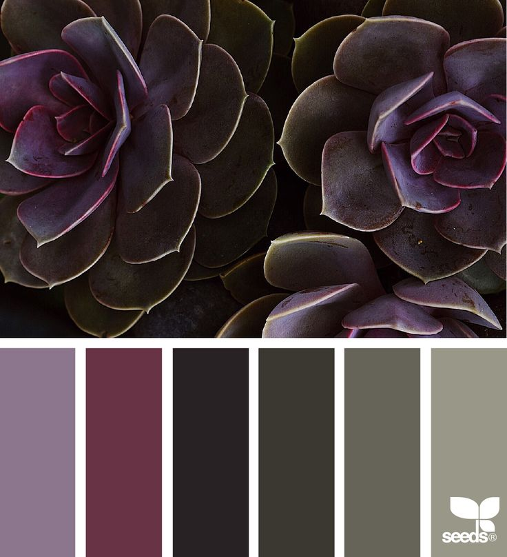 { succulent tones } image via: @traceybolton - like the first purple color