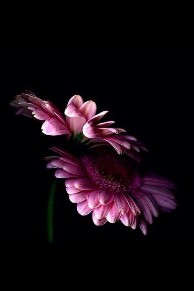 flower wallpaper blackpink Bloem fotografie