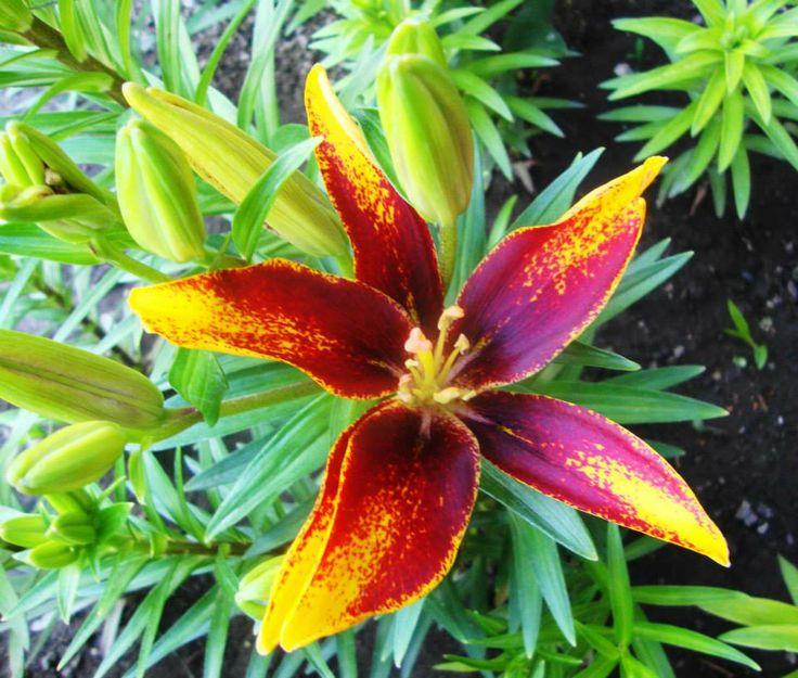 les 100 meilleures images concernant les plus belles fleurs du monde sur pinterest potirons. Black Bedroom Furniture Sets. Home Design Ideas