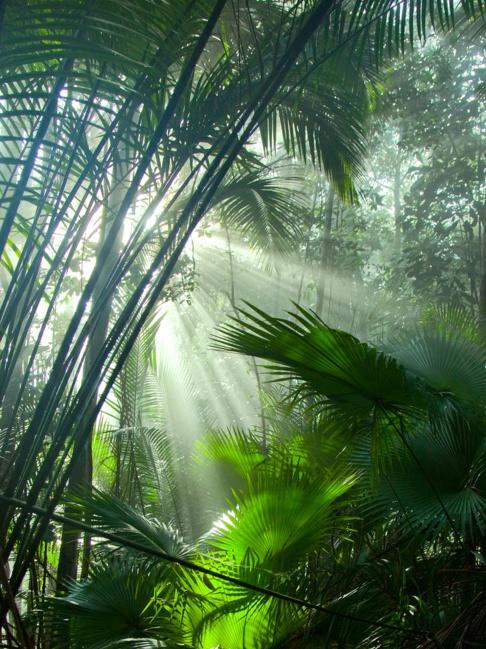 Lush forest in Costa Rica :)
