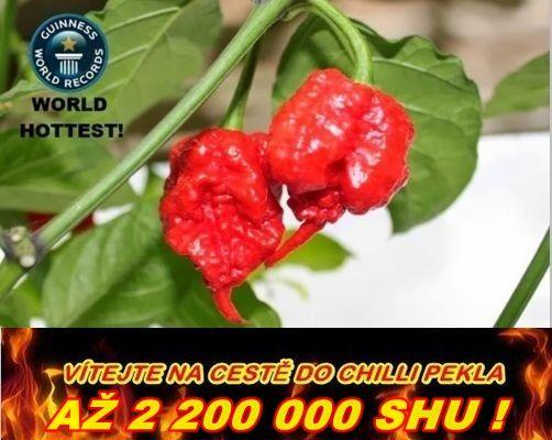 Nejpálivější chilli papričky HP22B Carolina reaper /5semen/