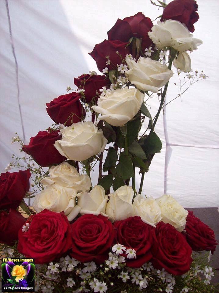 Combinación Rosas Rojas Blancas Hermoso Regalo