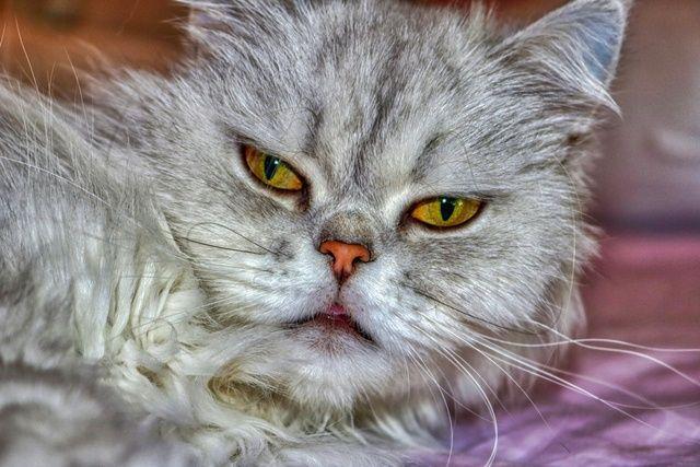 ว ธ การผ กม ตรก บน องแมวและการด แล ส งท ทาสแมวต องร ม อะไรบ างนะ ในป 2021 แมวเปอร เซ ย ส น ข หมา