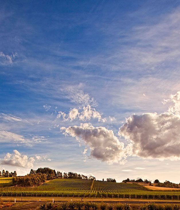 Great wine drive: Tasmania. Gourmet Wine Traveller