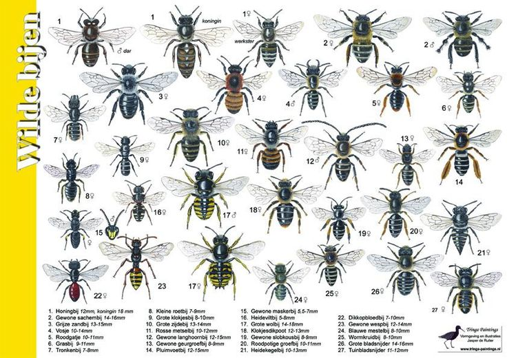 Zoekkaart Wilde Bijen