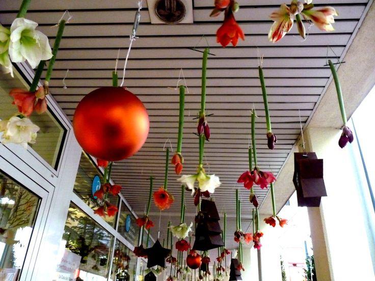 Im Trend: Amaryllis-Blüten abgehängt