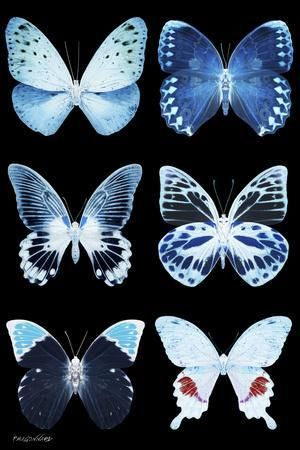 ""\""""Miss Butterfly X-Ray Black"""" Photographic Print ...""300|450|?|en|2|4c9298e02e781ae4c2f519c682066f1d|False|UNLIKELY|0.2939504086971283