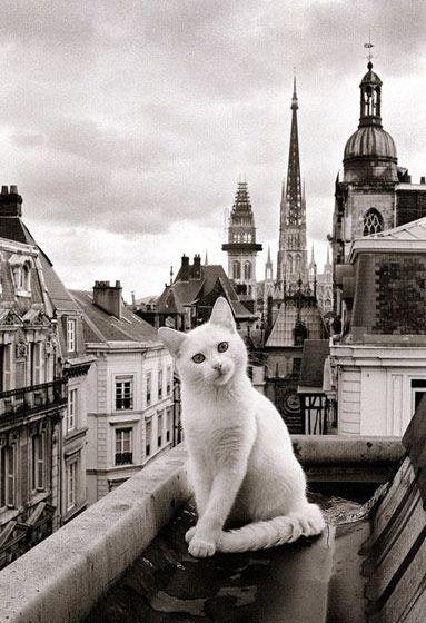 Un chat à Rouen en Normandie