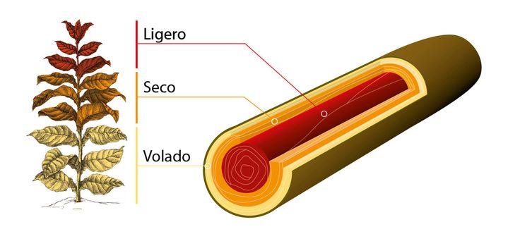 http://www.shmckr.com/woraus-besteht-eine-gute-zigarre-rauch-und-asche/  Woraus besteht eine gute Zigarre? Alles über Rauch und Asche.  http://www.shmckr.com/slug   Willy Alvero: Sind alle Tabakblätter gleich? Wovon hängt die Rezeptur einer #Zigarre ab? Wie rollt man sie richtig? Woraus besteht der #Zigarrenrauch? Welche #Temperatur hat das Zigarrenende? Und wozu braucht man die Asche? #zigarrenkunde #blauerdunst